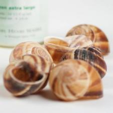Escargots Snail Shells (12-pack)